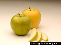 s-GMO-APPLES-large