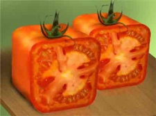 tomates-cuadrados