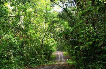 rainforestDiscoveryCenterAtPipelineRoad_trip_photo.jpg