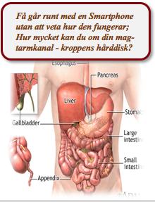 bild på kroppens organ