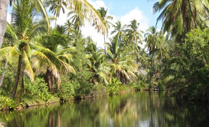 kokospalmer.jpg