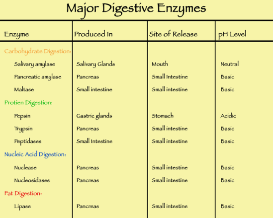 major-digestive-enzymes.png