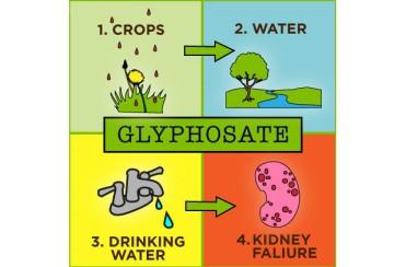 2014-08-08-epa-considers-glyphosate-ban-cycle.jpg