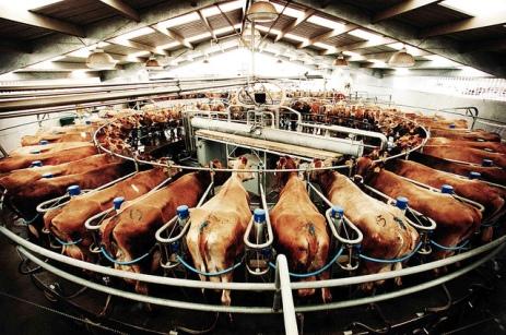 Flickr-factory-farm-Ardarve.jpg