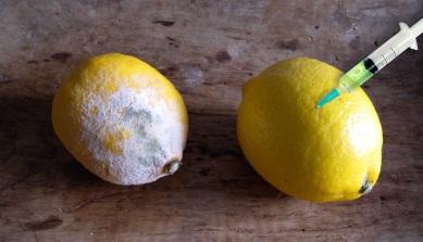 Citronkoll Egen smal bild.jpg