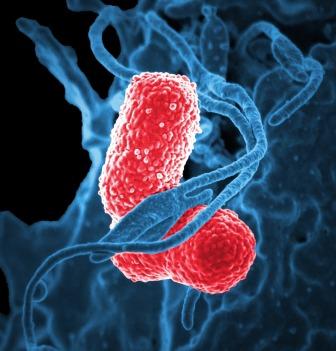 bacteria-811861_1920-1.jpg